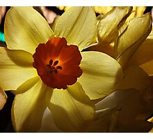 Easter Delight Photographic Print