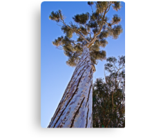 Nature's High Rise Canvas Print