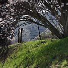 Spring Bling by CarolM