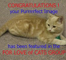 Feature Banner : For The Love of Cats group by jacqi