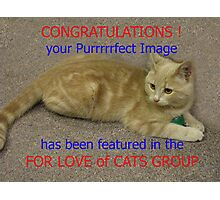 Feature Banner : For The Love of Cats group Photographic Print