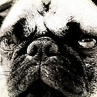 Grumpy Pug Face by Darlene Lankford Honeycutt