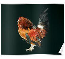 Belgian d'Anver Quail Cock Poster