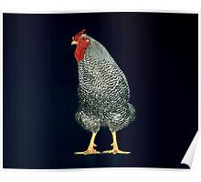 American Largefowl Dominique Cockerel Poster