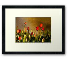 Spring Rain Over The Red Tulips Framed Print