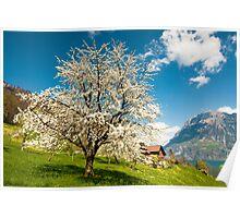 rural scenery at lake lucern Poster