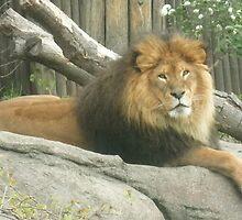 Metroparks Zoo 6 by BarbBarcikKeith