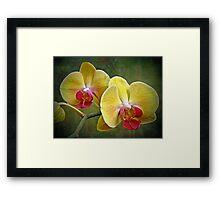 Yellow Moth Orchid - Phalaenopsis Framed Print