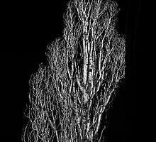 Arbol by Valerie Rosen