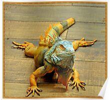 Iguana..... Poster