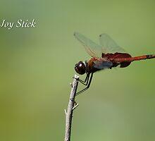 Joy Stick by JpPhotos