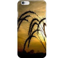 Backlit Wheat Nature by Carol Sue iPhone Case/Skin