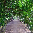 Pretty Green Walkway at Abbotsbury Dorset UK by lynn carter