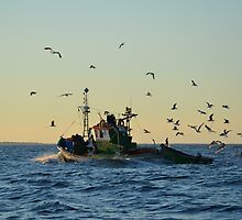 Fishing Boat Mobbed By Gulls by Malcolm Snook