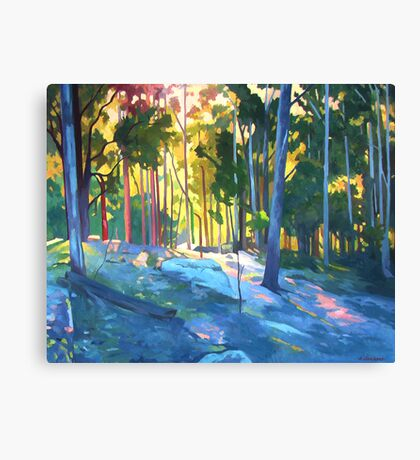 Sunlight through trees Canvas Print