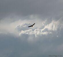 Eagle Soaring by Edmond  Hogge