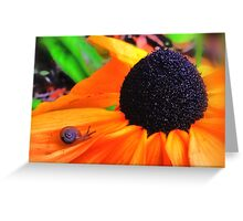 Yellow Snail Flower Greeting Card