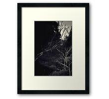 Black Forest Framed Print