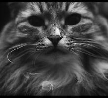 Dark Cat by MsDunwich