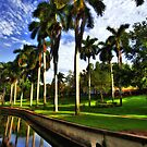 Royal Palms at Roser Park by sailorsedge
