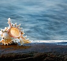 Shell 1 by Eduard Gorobets