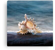 Shell 2 Canvas Print
