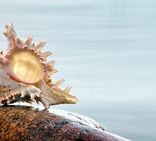 Shell 5 by Eduard Gorobets