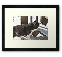 Old Cat Going Up Framed Print