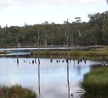 Dee Lagoon in Tasmania 3 by Antonia Newall