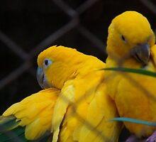 Yellow Birds by Matthew Bonafe