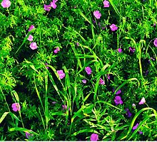 Green Grass Summer Background with Little Lilac Flowers by Mallorn