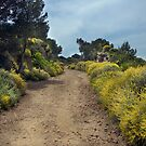 Track to Bateria Cenizas, Costa Calida, Spain by Squealia