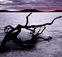 Salty Dead Tree by jemadds