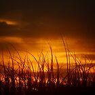 Grass of the Sand Dunes, North Coast, NSW, Australia by Of Land & Ocean - Samantha Goode