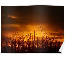 Grass of the Sand Dunes, North Coast, NSW, Australia Poster