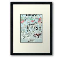 CANUS LUPUS Framed Print