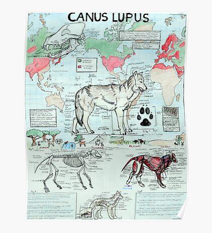 CANUS LUPUS Poster