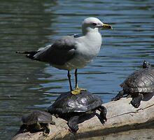 Birds and Turtles by mvpaskvan