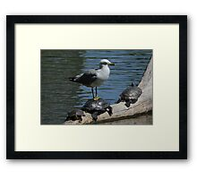 Birds and Turtles Framed Print