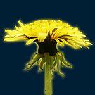 dandelion by satterflOw