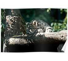 New Snow Leopard IV Poster