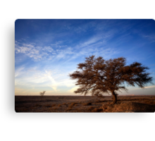 Dry parched tree in a desert landscape  Canvas Print