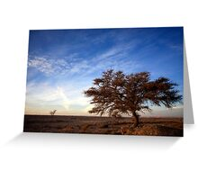 Dry parched tree in a desert landscape  Greeting Card