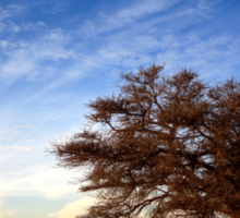 Dry parched tree in a desert landscape  Sticker