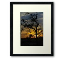 Dry parched tree in a desert landscape at sunset Framed Print