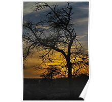 Dry parched tree in a desert landscape at sunset Poster