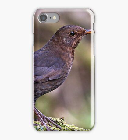 Blackbird - Turdus Merula (female) iPhone Case/Skin