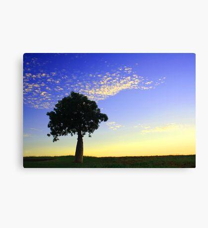 Boab at Sunrise Canvas Print