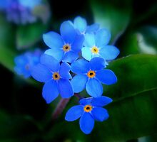 Forget-Me-Not !! by Eugenio