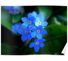 Forget-Me-Not !! Poster